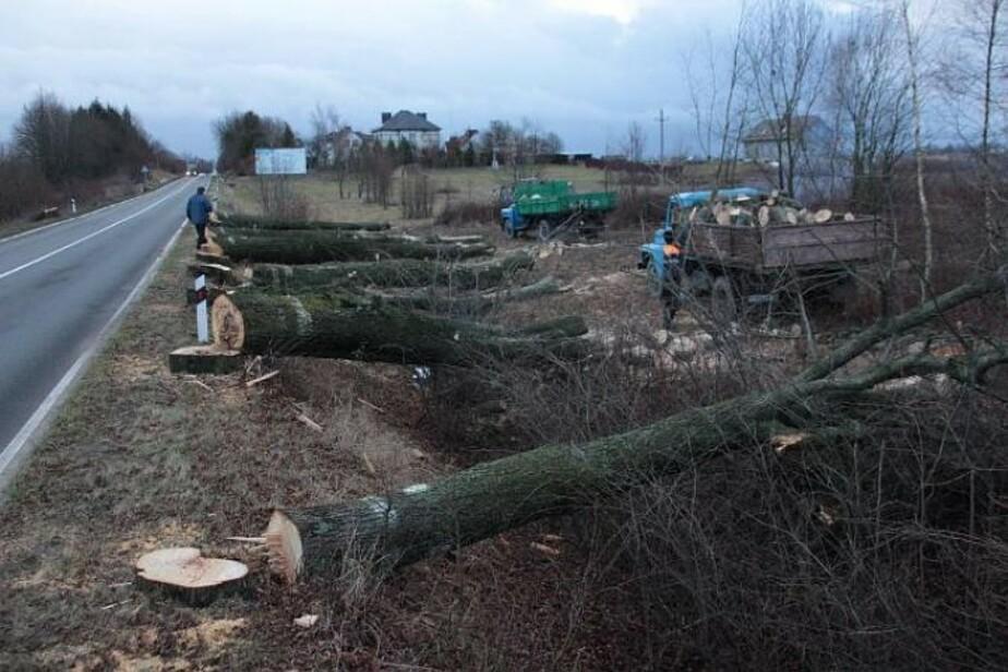 Трассу возле посёлка Храброво расширили, срубив более тысячи деревьев