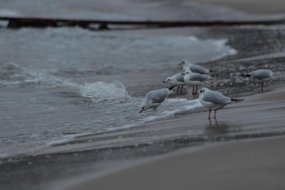 До субботы калининградцы будут ощущать воздействие магнитных бурь - Новости Калининграда