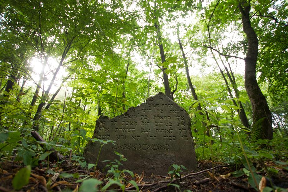 На еврейском кладбище в Калининграде нашли раскуроченные мемориальные плиты (фоторепортаж) - Новости Калининграда