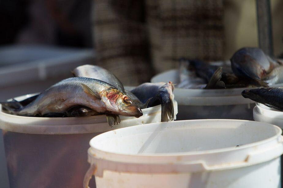 В Калининграде судят продавца рыбы, обманувшего покупателей на миллион рублей  - Новости Калининграда