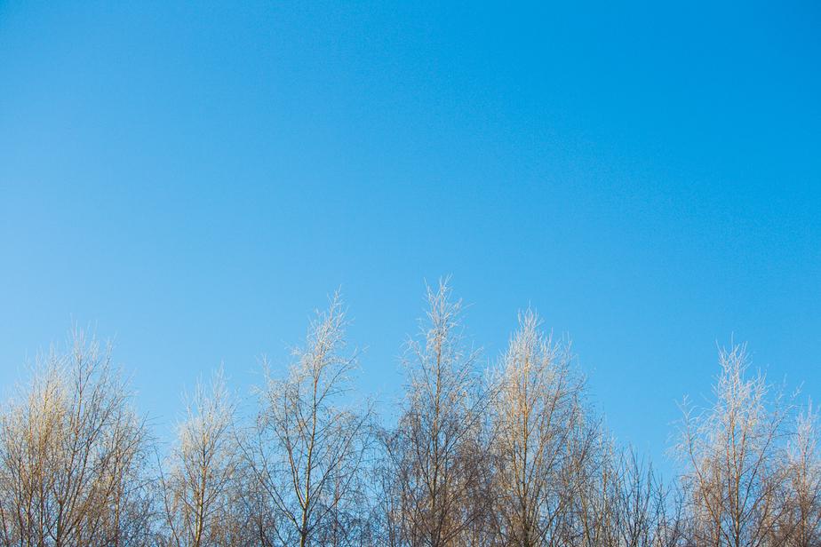 На новогодних каникулах калининградцев ждут мороз  и солнце