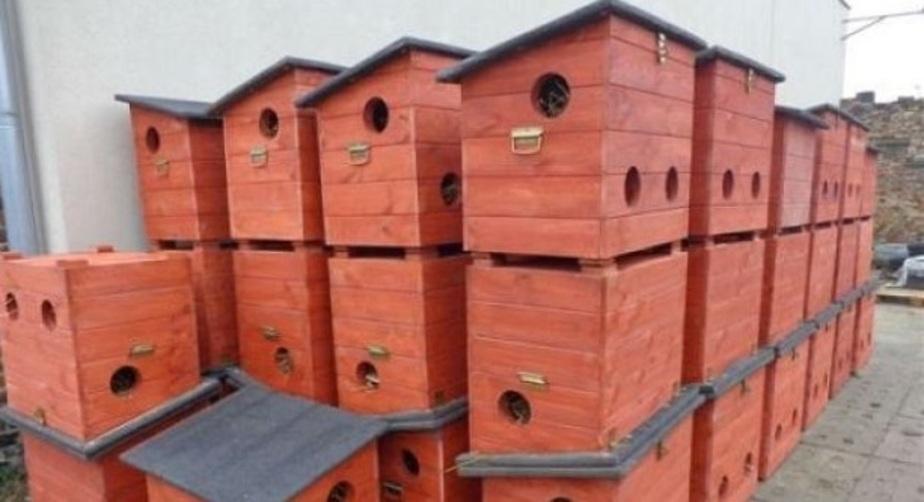В Гданьске для бездомных котов построили 130 домов