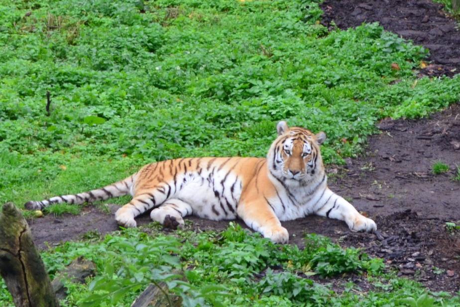 Фото: Калининградский зоопарк
