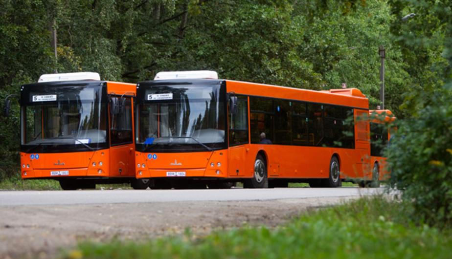 В Калининграде опять на линию вышли новые белорусские МАЗы - Новости Калининграда