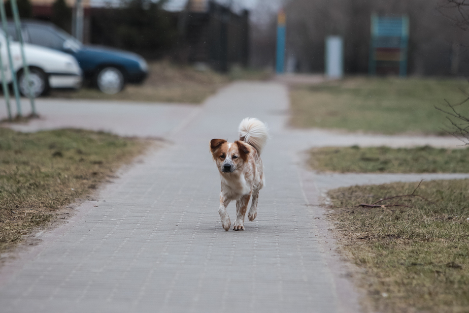 Волонтеры: в кризис бездомных животных становится больше - Новости Калининграда