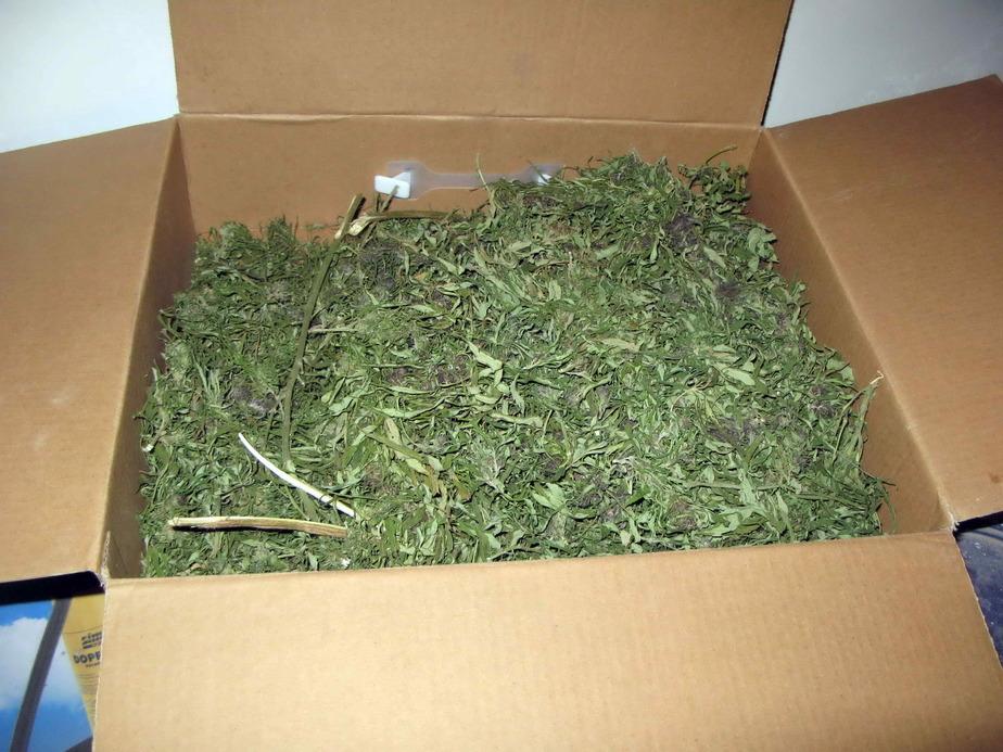 Житель Краснознаменска хранил в подвале 3 кг марихуаны  - Новости Калининграда