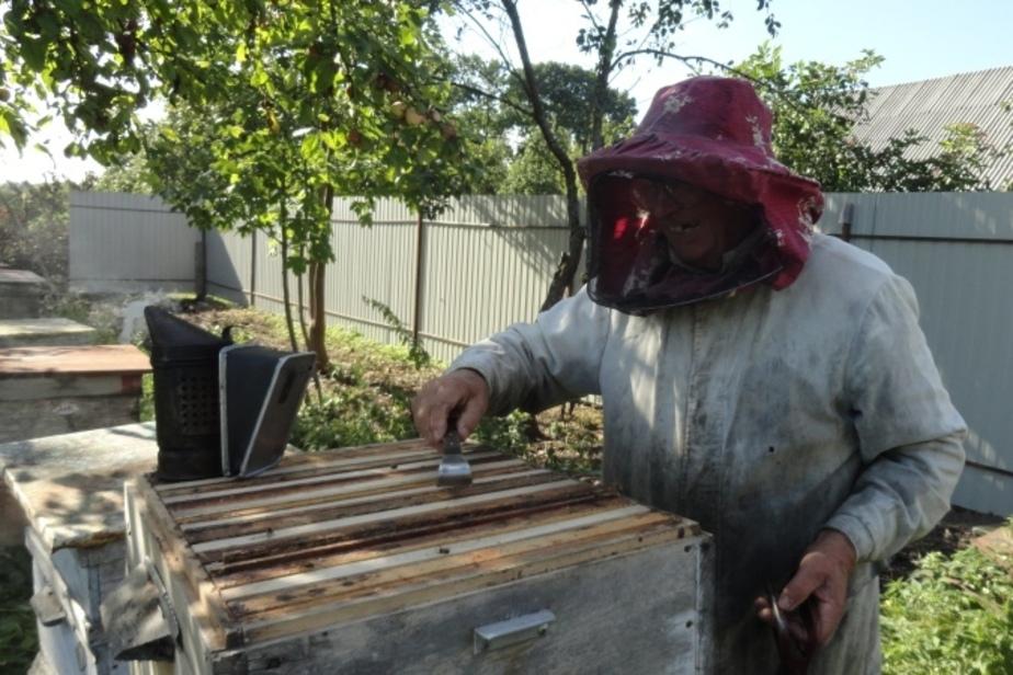 """""""Сладкий дедушка"""": калининградский пасечник о том, что не любят пчёлы и в чём залог хорошего урожая - Новости Калининграда"""