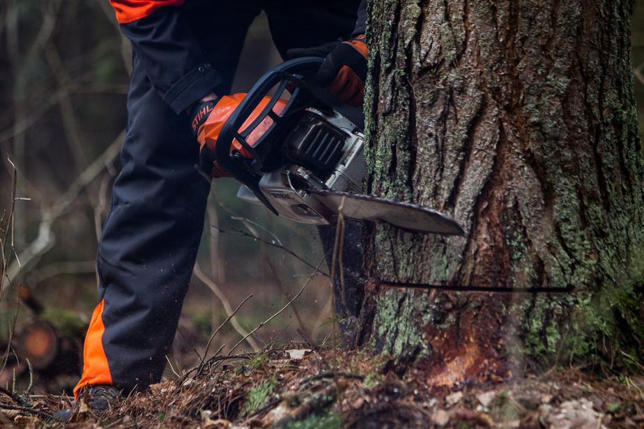 Минприроды хочет разрешить капитальное строительство в лесу - Новости Калининграда