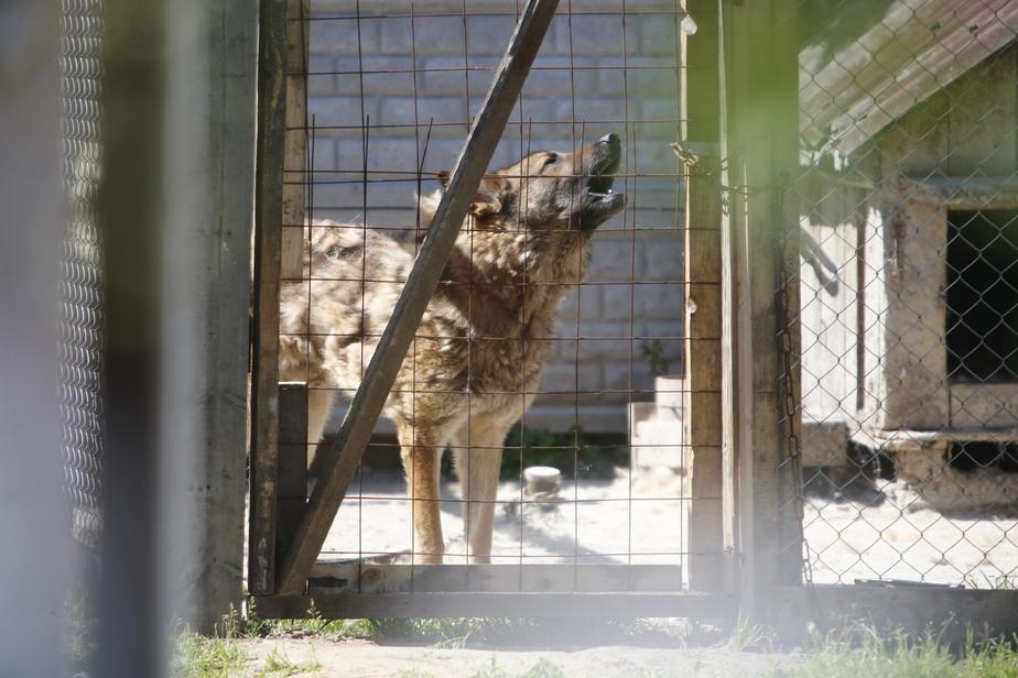Главный ветврач: Раньше основную часть бездомных животных в Калининграде убивали