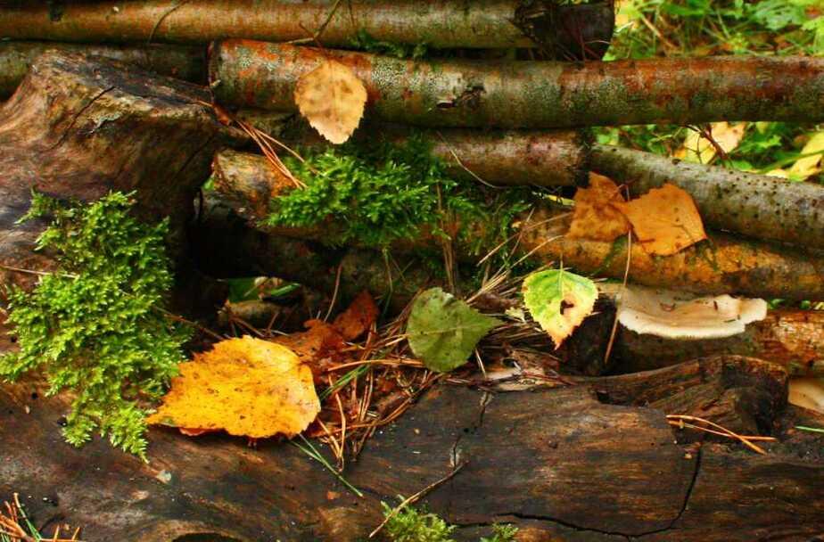 Лекарство в лесу: какие травы в Калининградской области собирают осенью - Новости Калининграда
