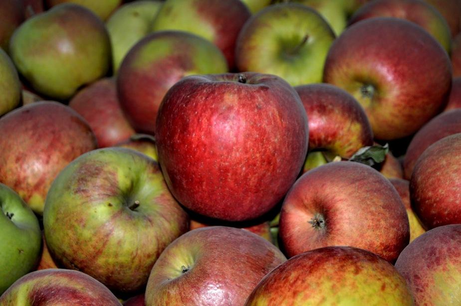 СМИ: польские яблоки вернулись на российский рынок под видом белорусских - Новости Калининграда