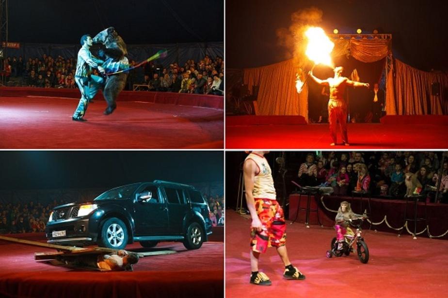 В цирке пройдет самое яркое новогоднее шоу в Калининграде! - Новости Калининграда