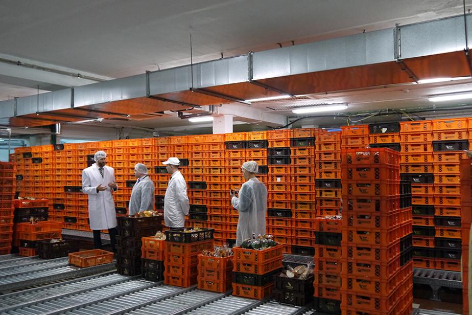 Калининградские власти ищут инвестора для мукомольного завода