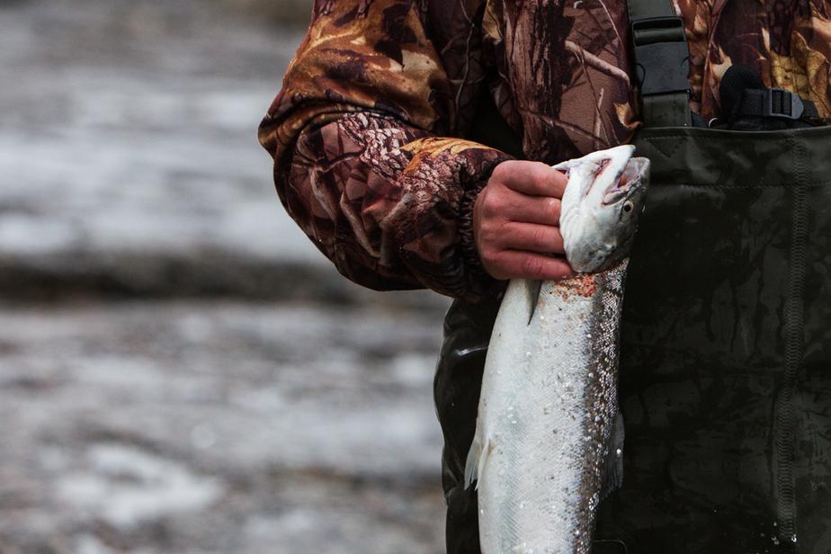 С начала года у калининградских браконьеров изъяли полтонны рыбы  - Новости Калининграда