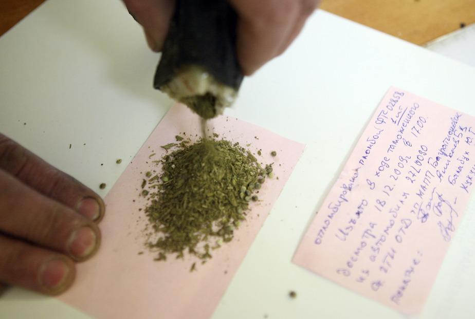 В Калининграде задержали двух торговцев марихуаной - Новости Калининграда