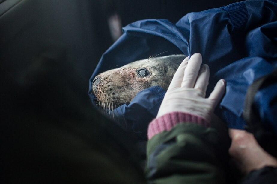 В Калининградском зоопарке появился на свет тюленёнок - Новости Калининграда