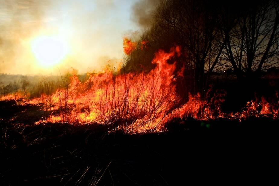 За сутки сотрудники МЧС четыре раза выезжали на тушение горящей травы - Новости Калининграда