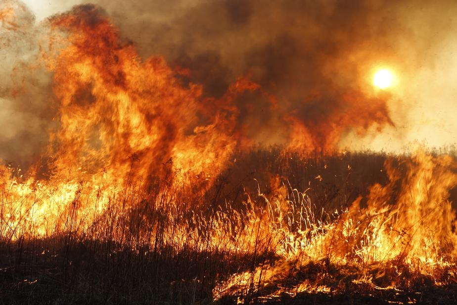 В Калининградской области за день в огне погибли два мужчины