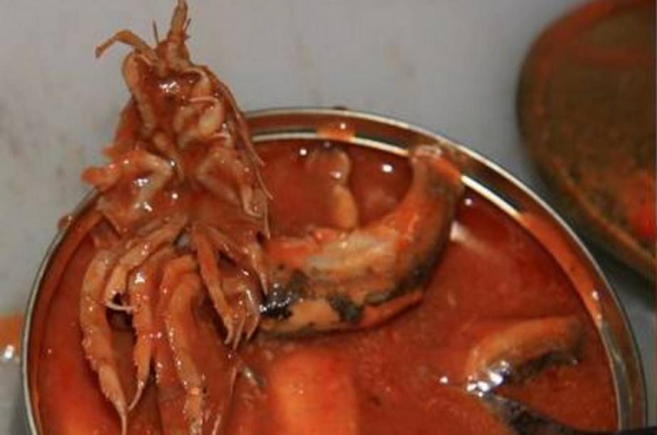 В Балтике водятся морские тараканы, которые попадаются вместе с килькой - Новости Калининграда