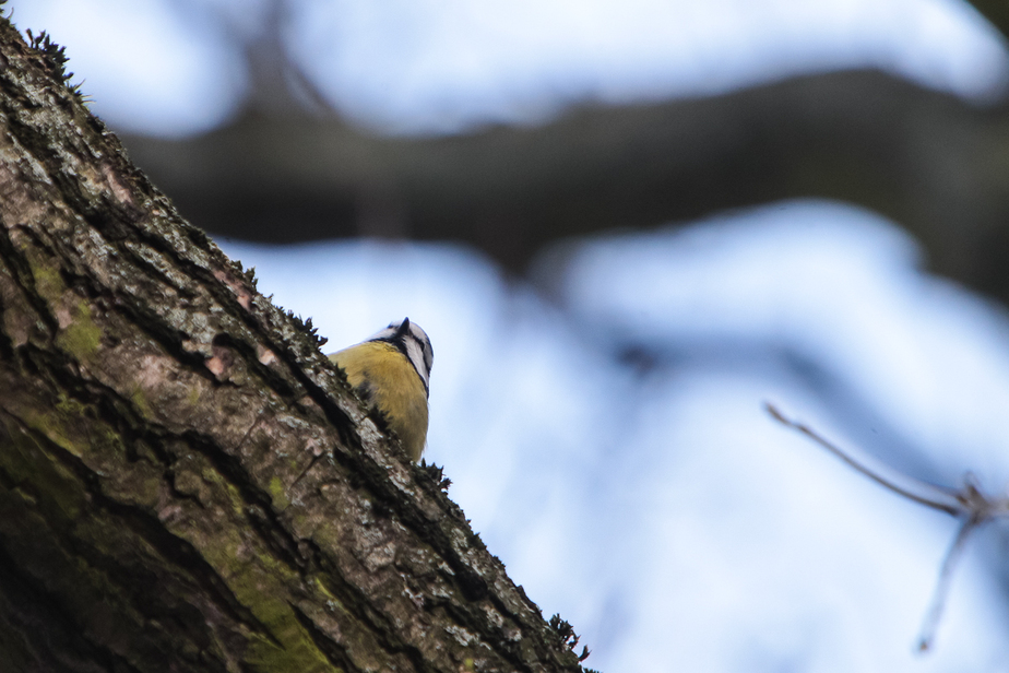 Зачем калининградцы будут наблюдать за птицами в выходные - Новости Калининграда