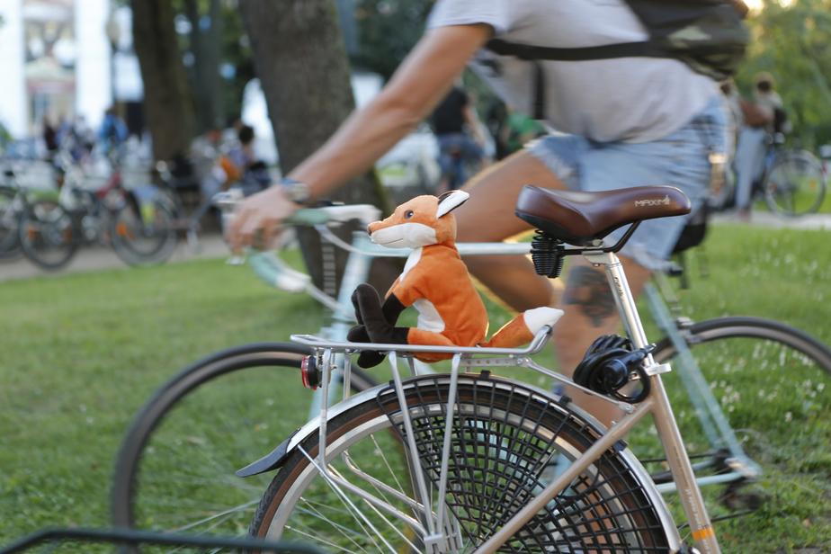 Депутаты предложили приравнять кражу велосипедов к угону - Новости Калининграда