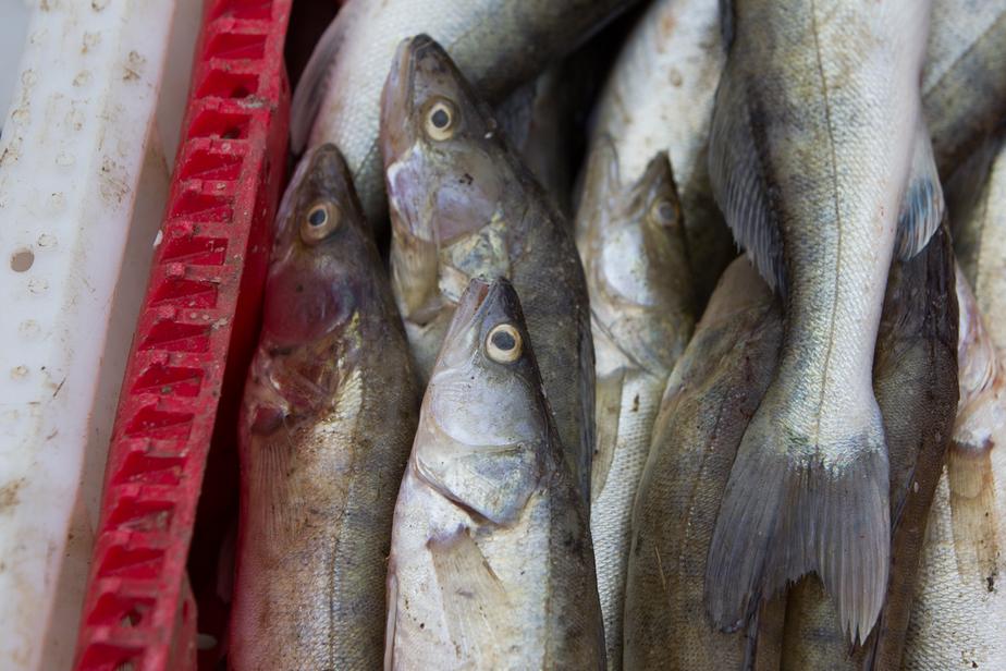 Россия с 14 декабря запретила ввоз рыбы через Литву