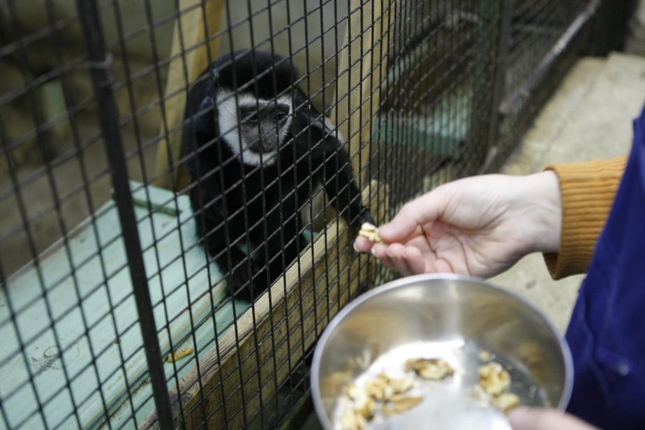 Калининградский зоопарк: наши животные готовы съесть санкционные овощи и фрукты - Новости Калининграда