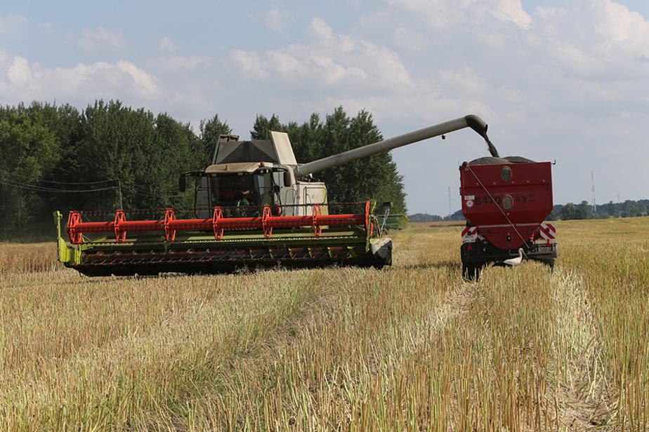 Калининградская область стала лидером России по урожайности рапса - Новости Калининграда