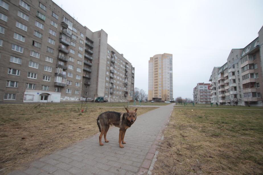 В Калининграде считать бездомных животных будут волонтёры, а ловить — частники - Новости Калининграда