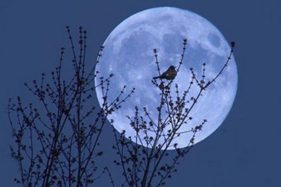 В июле калининградцы смогут увидеть Голубую луну  - Новости Калининграда