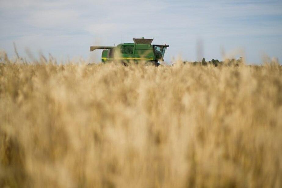 Российские поставщики зерна из-за обвала рубля заморозили экспорт - Новости Калининграда