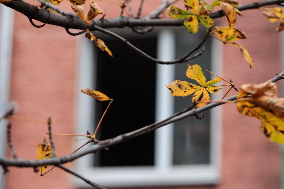 Калининградский суд оставил семью военного в служебной квартире после его переезда - Новости Калининграда