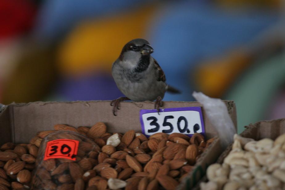Власти Калининграда определили 9 мест для мини-рынков (список)  - Новости Калининграда