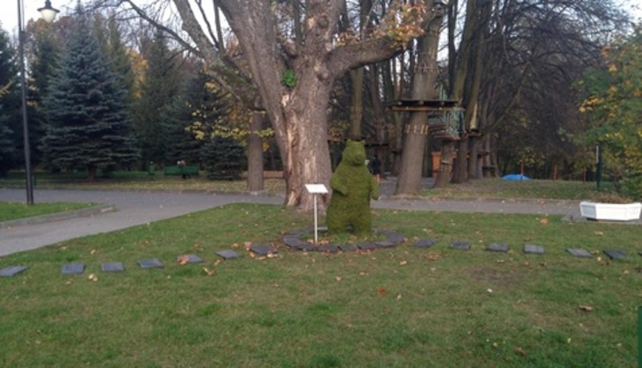 Цуканов: в Калининградской области будут сажать по миллиону деревьев в год - Новости Калининграда