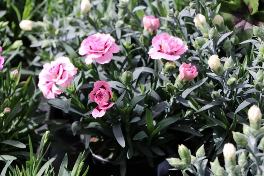 """Здесь будет сад: """"Маленькая Италия"""" и аптека для растений появятся в """"Бауцентре"""" - Новости Калининграда"""