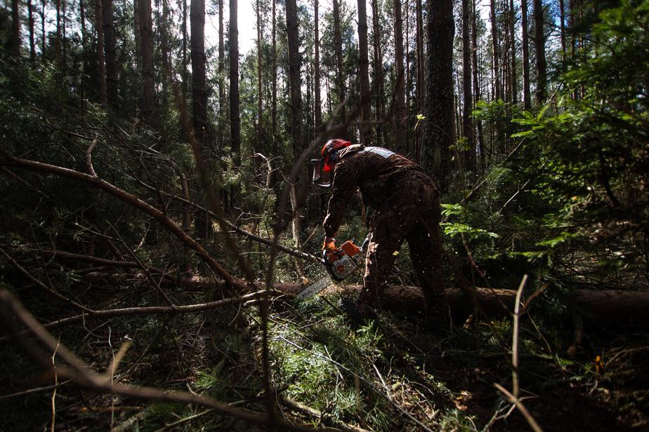 """""""Янтарьэнерго"""": лесорубы лишают калининградцев электроснабжения"""