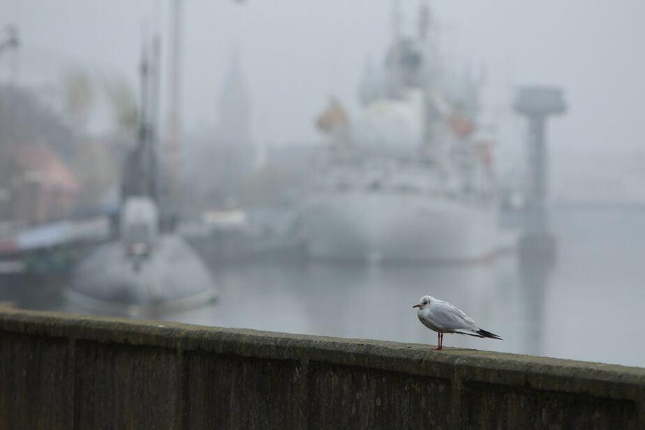 Синоптики: следующая неделя в Калининграде будет морозной и снежной - Новости Калининграда