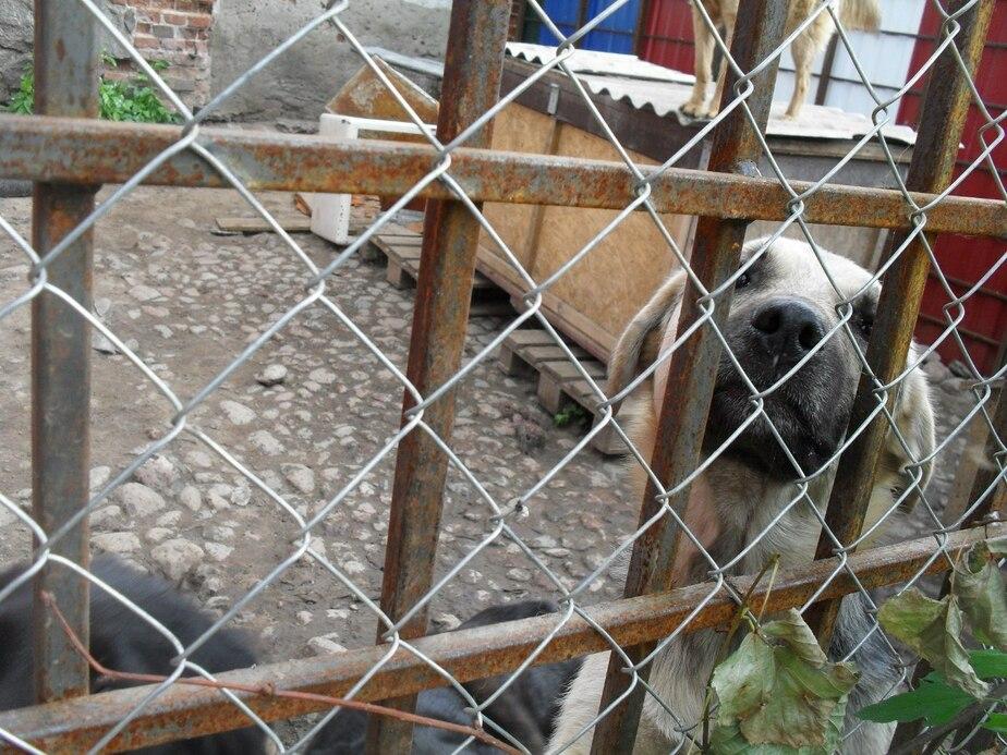 """""""Мы кричим о помощи"""": калининградский приют оказался на грани закрытия"""