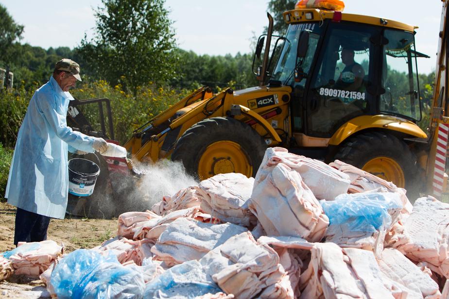 500 тонн за неделю: Россельхознадзор подвел первые итоги уничтожения санкционных продуктов - Новости Калининграда
