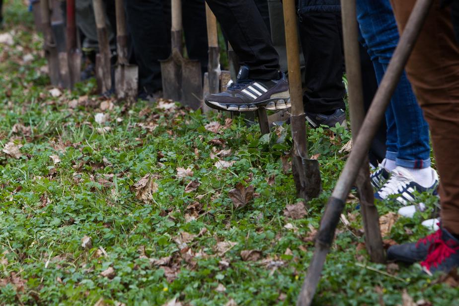 Администрация Зеленоградска планирует через суд обязать Янтарный комбинат высадить более двух тысяч деревьев - Новости Калининграда
