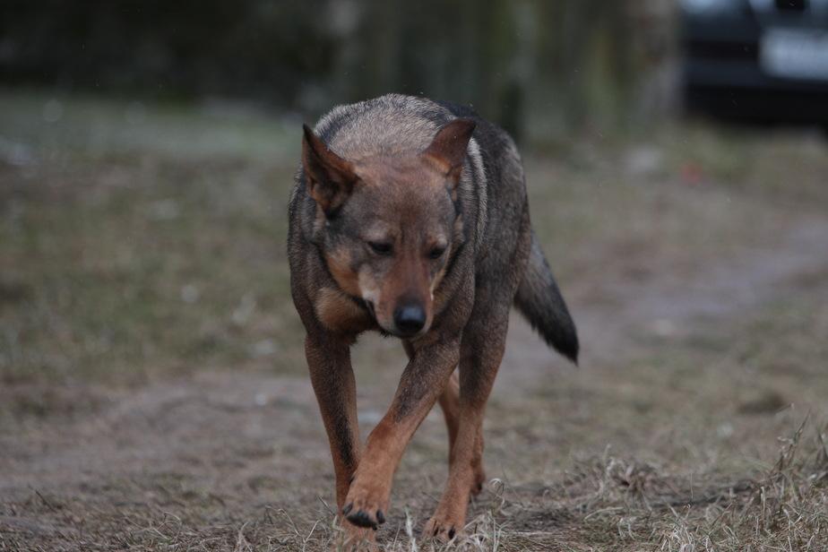 """""""Щенок плакал на весь двор"""": жители Гвардейска пожаловались на жестокий отлов собак"""