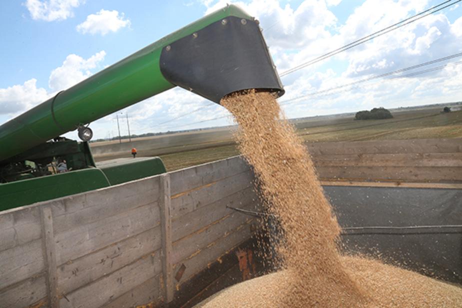 Правительство: в Калининградской области урожайность ячменя почти вдвое выше средней по России - Новости Калининграда