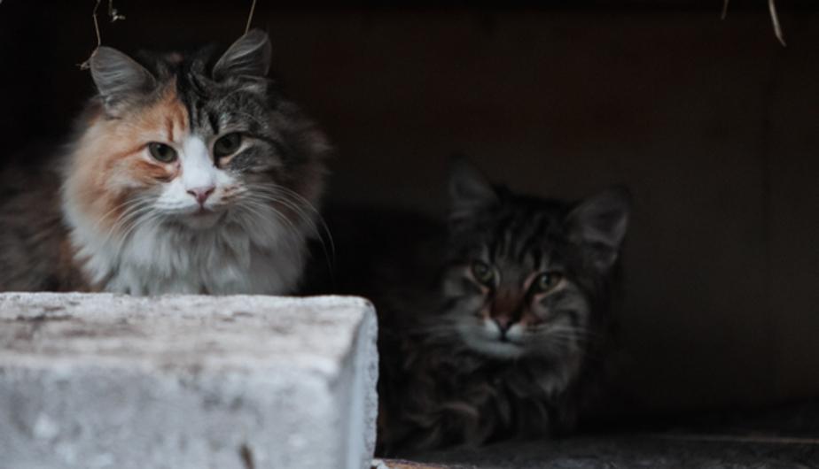 Польский журналист попросил сотрудников МИД РФ позаботиться о его кошке