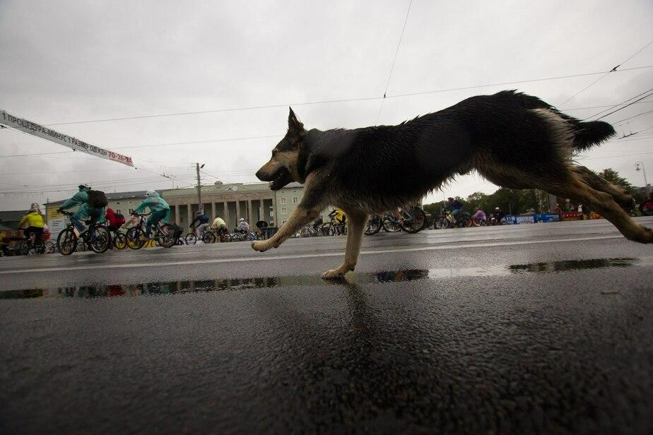 Пропала собака по кличке Люси: что делать, если питомец убежал - Новости Калининграда