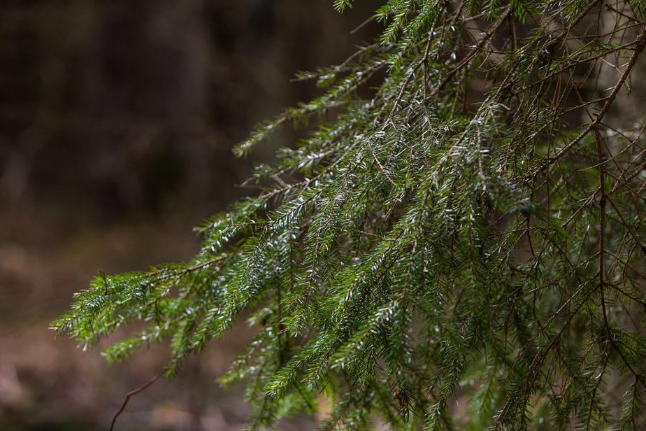 Региональное правительство приглашает калининградцев на уборку леса - Новости Калининграда