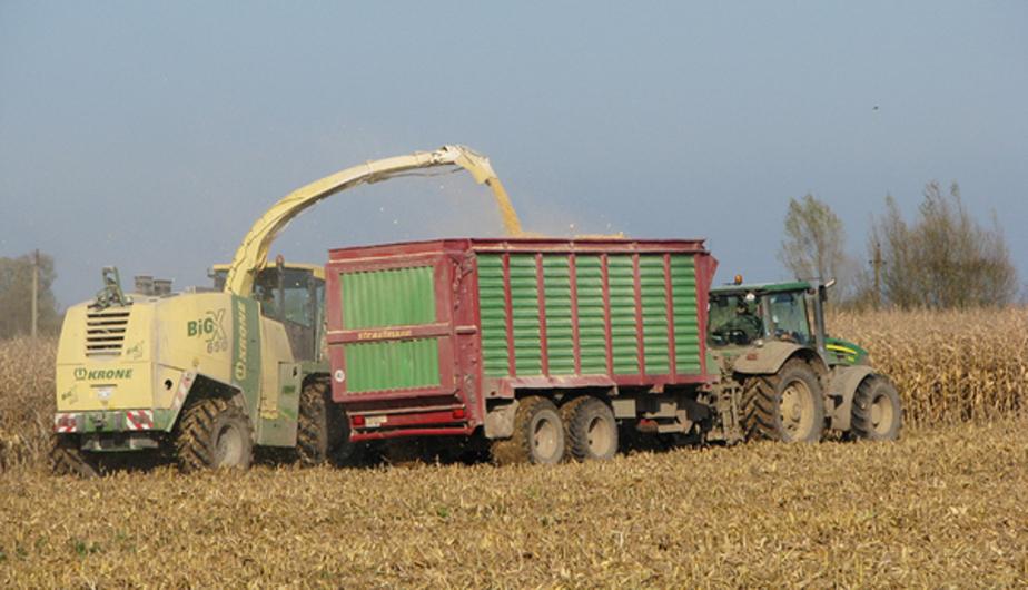 Калининградстат: в области снизилась урожайность зерновых в 2016 году - Новости Калининграда
