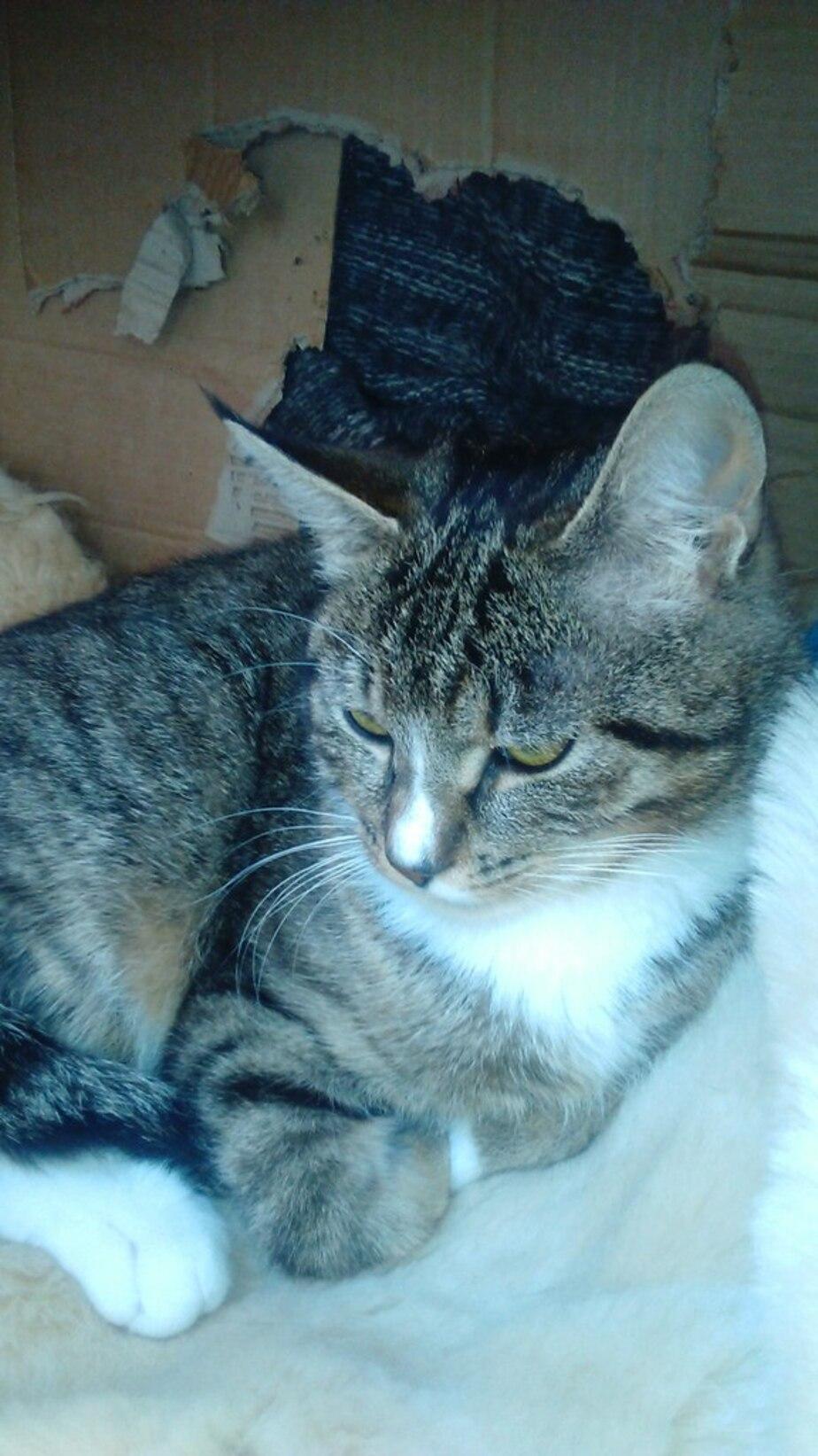Калининградец спас живущую в канализации кошку с оторванной лапой