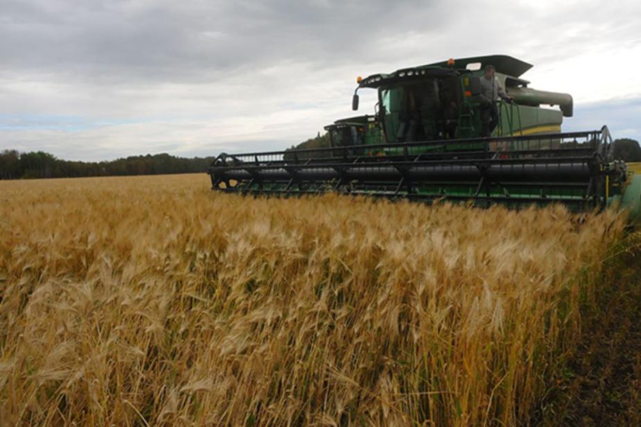 В Калининградской области ожидают рекордный урожай  - Новости Калининграда