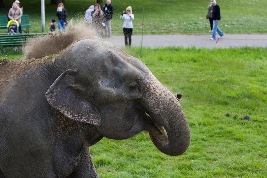 В трёх польских городах введен запрет на цирк с участием животных
