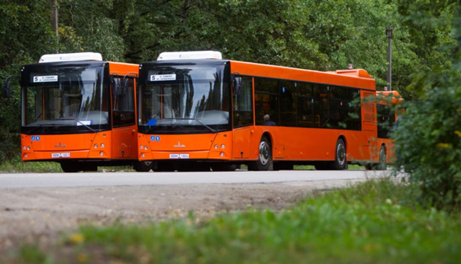 Мэрия просит калининградцев оценить новые белорусские автобусы - Новости Калининграда
